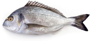 <p>Fish: </p><p>Sea Bream</p>